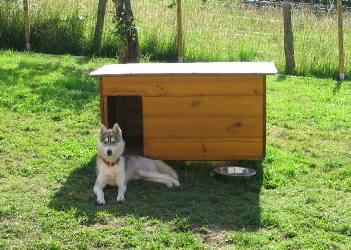 Construction niches - Plan niche pour chien gratuit ...