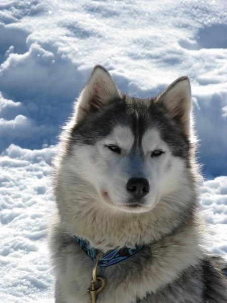 Nos p'tits loups ... VouchkaP