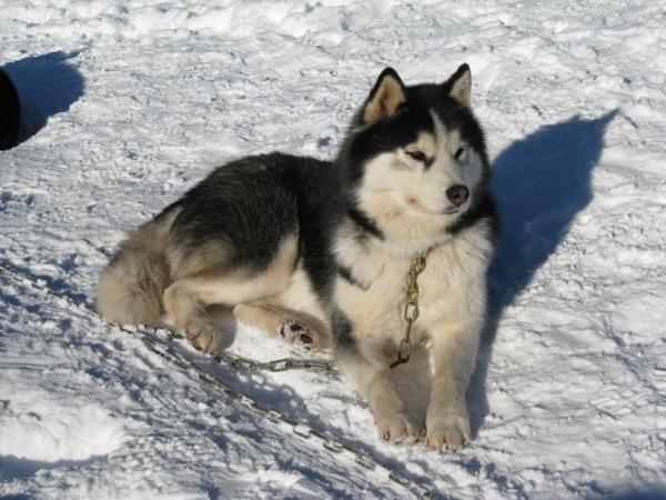 Nos p'tits loups ... VoulkC